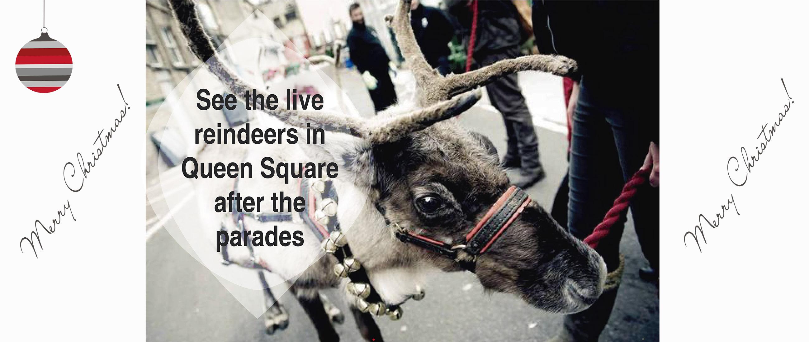 reindeers-queen-square-31